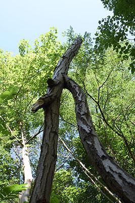3 ème branches redressée
