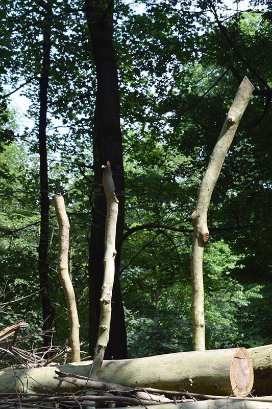 dans le bois 08