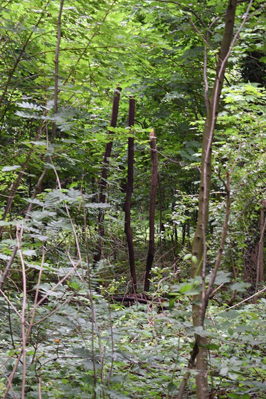 dans le bois 09