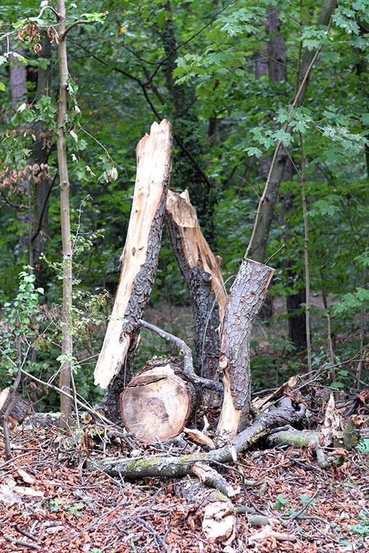 dans le bois 11