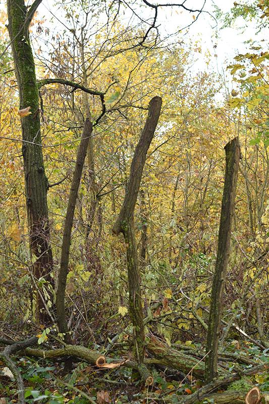 dans le bois 12