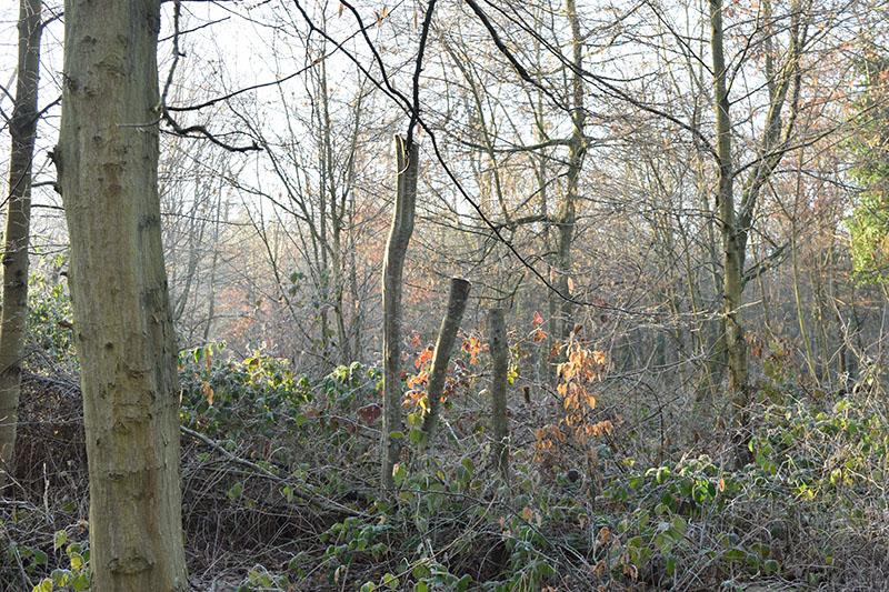 dans le bois 14